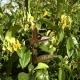 Siepe o rampicanti (sempreverde): 4 metri